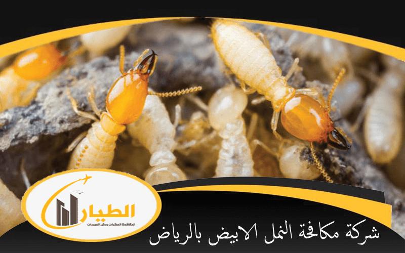 شركة مكافحة النمل الابيض بالرياض