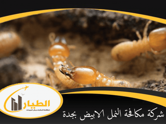 شركة مكافحة النمل الابيض بجدة