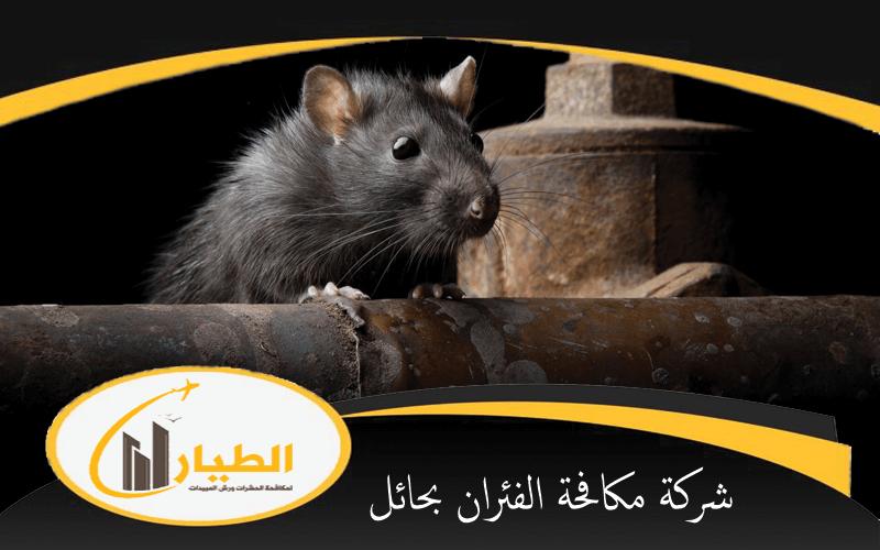شركة مكافحة الفئران بحائل