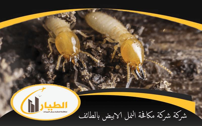 شركة شركة مكافحة النمل الابيض بالطائف
