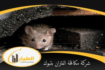 شركة مكافحة الفئران بالمجمعة