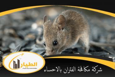 شركة مكافحة الفئران بالجبيل