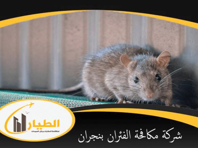 شركة مكافحة الفئران بنجران