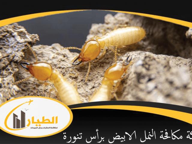شركة مكافحة النمل الابيض برأس تنورة