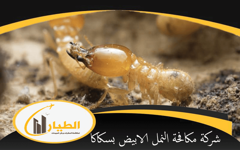 شركة مكافحة النمل الابيض بسكاكا